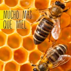 * Mucho más que miel